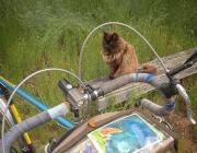 Photo of cat and bike