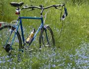 Blue bike in blue flowers