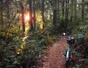 Photo of bike on trail